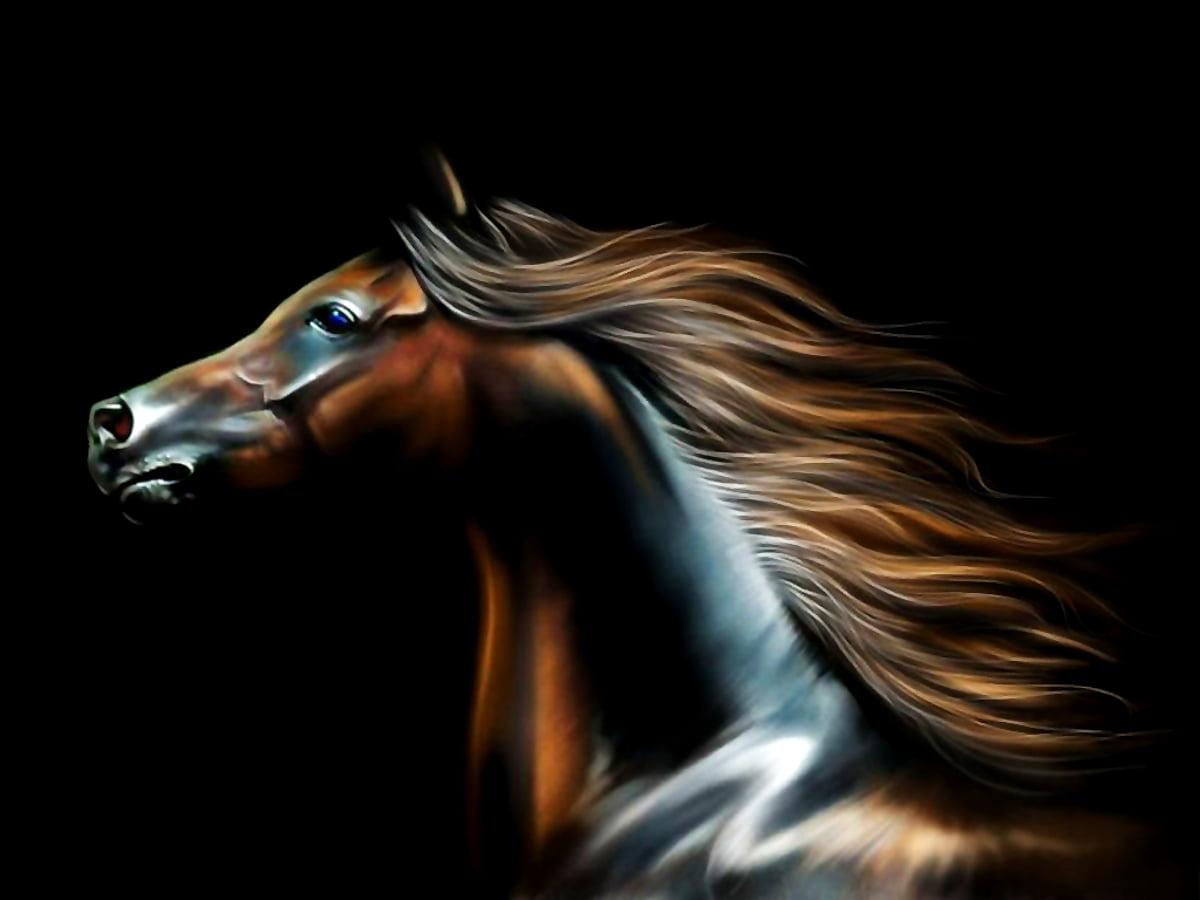 Pferde desktop-hintergrundbilder kostenlos Hintergrundbilder Schoene